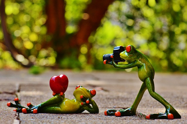 frogs-903158_640